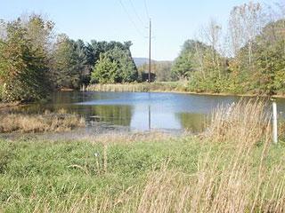 Shipwreck farm b k haynes for Bass pond construction